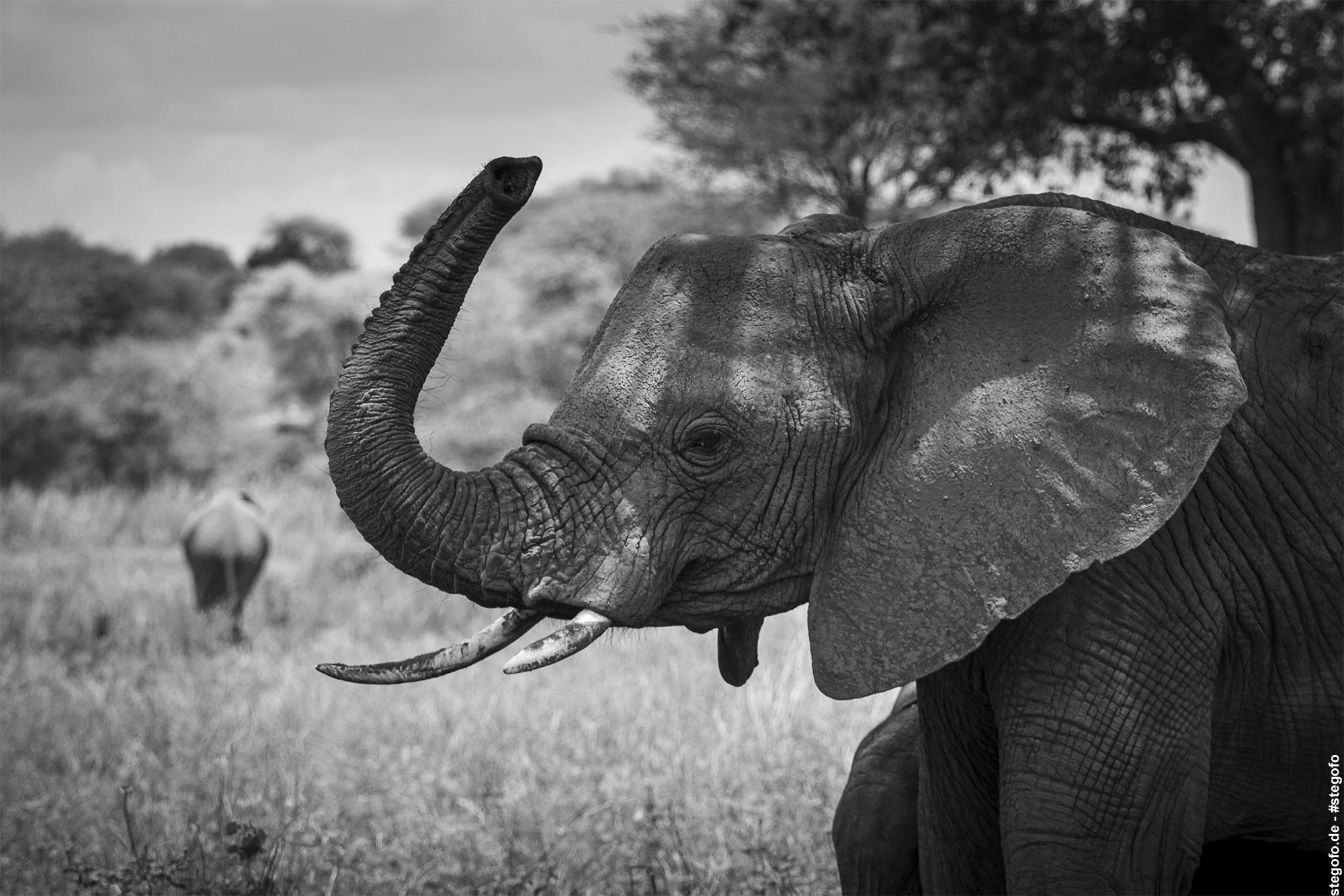 Der Elefant im Schatten