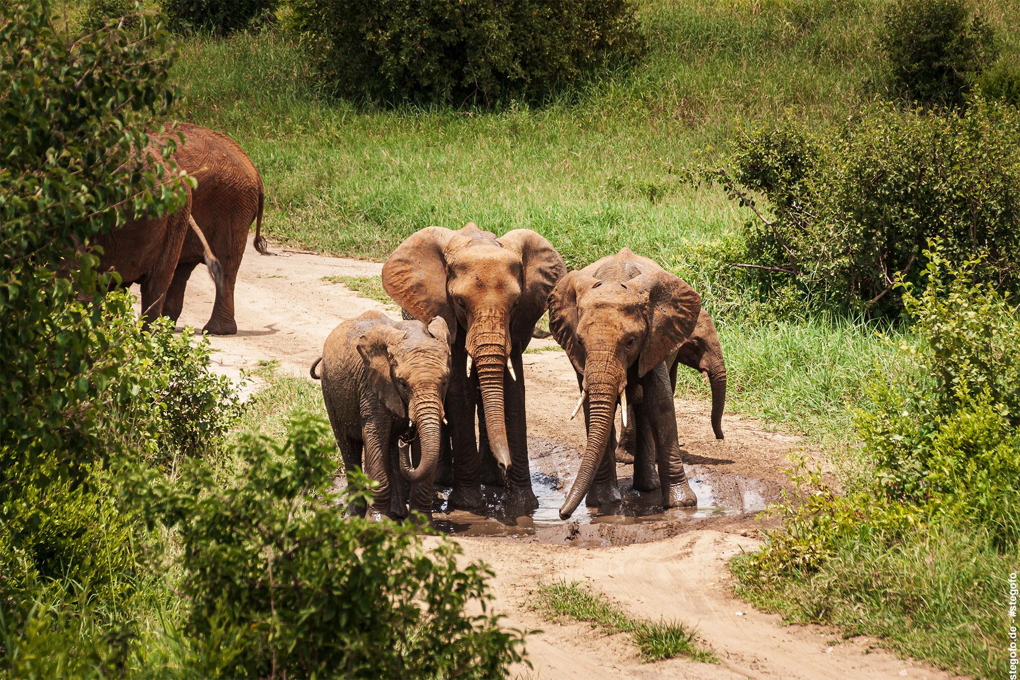 Die geheimnisvolle Pfütze - Elefanten haben Spaß