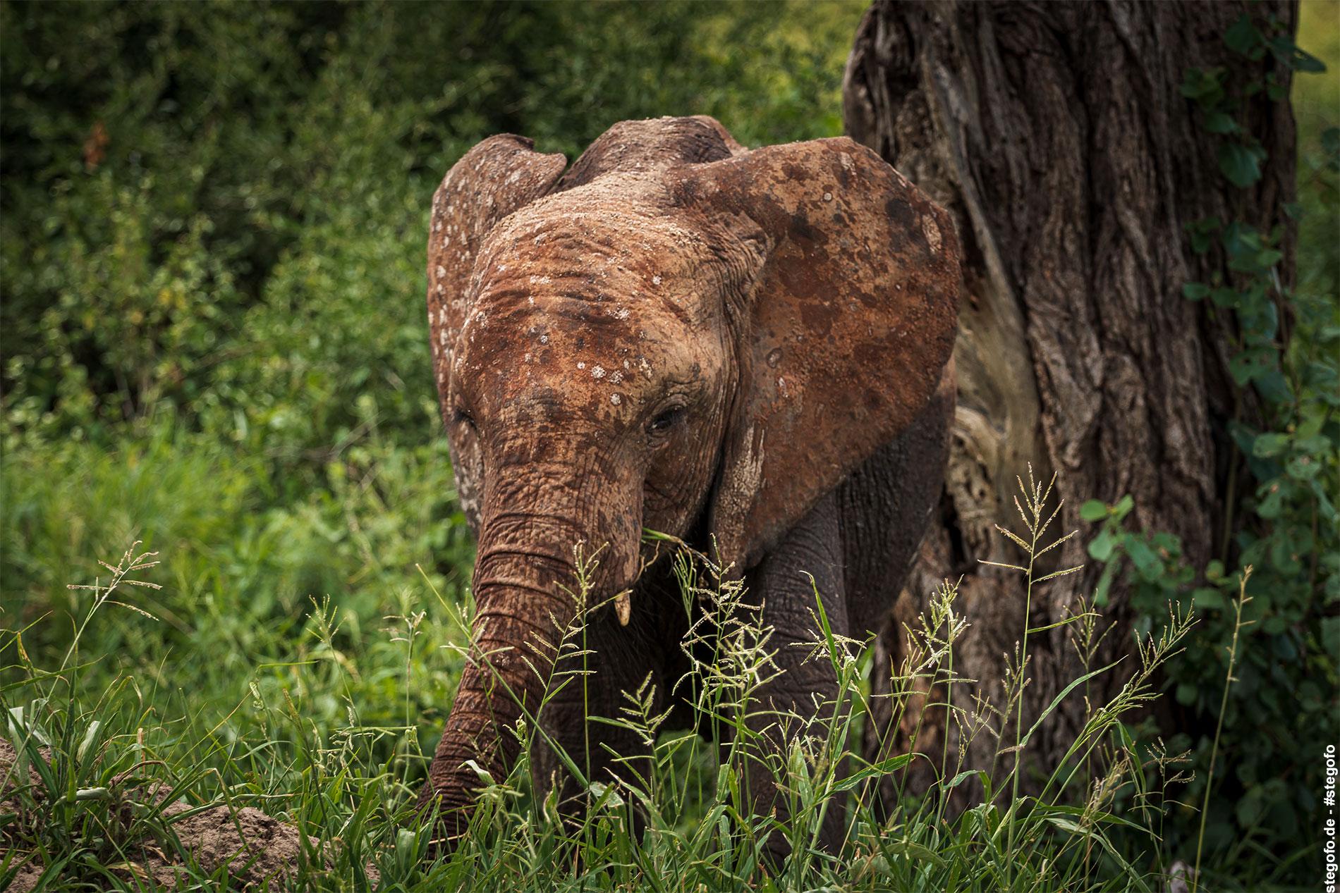 Der verträumte Elefant
